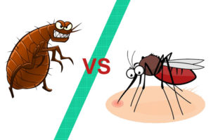 Know the difference between flea bites vs mosquito bites
