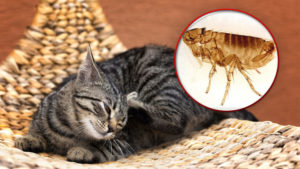 Protect Your Cat and Home from Fleas