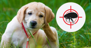 How to kill the fleas on dogs